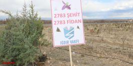 Azerbaycan'daki 2 bin 783 Şehit için fidan diktiler