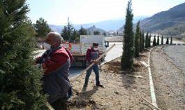 Belediye Şehitlikte ağaçlandırma ve bakım çalışmalarını sürdürüyor