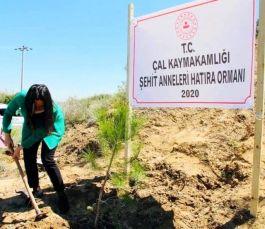 Şehit anneleri için hatıra ormanı oluşturuldu